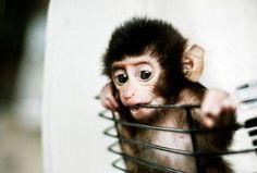 cute monkey!