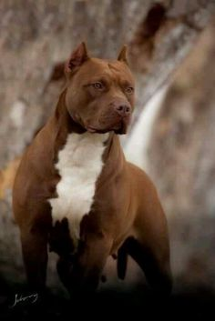 One of the single most gorgeous dog breeds. I feel like I should be saluting him.