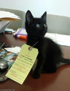 Lost_And_Found such pleading eyes. Please take me home! I will make you happy! PurritoCat