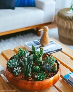 Learn how to make an amazing centerpiece for your coffee table using mini cactus and succulents.(in Portuguese) Succulent Bowls, Succulent Arrangements, Succulent Terrarium, Cacti And Succulents, Planting Succulents, Planting Flowers, Terrarium Ideas, Suculentas Diy, Cactus Y Suculentas