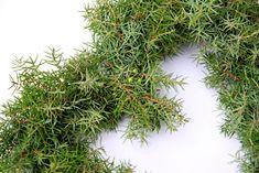 Suvikumpu: HAVUSYDÄN JA -KRANSSI - ohje Diy Wreath, Christmas Wreaths, Herbs, Christmas Deco, Crown Flower, Wreaths Crafts, Herb, Diy Garland, Medicinal Plants