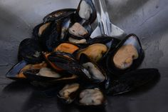 Fresh Mussels Seafood Festival at Beacon Island in Mussels Seafood, Events, Fresh, Island, Vegetables, Shopping, Art, Happenings, Block Island