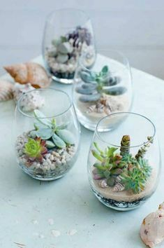 Want to make your own DIY Terrarium?Create a unique terrarium design, such as adding some sea shells for a nautical vibe. Suculentas Interior, Suculentas Diy, Cactus Y Suculentas, Cacti And Succulents, Planting Succulents, Planting Flowers, Succulent Cuttings, Potting Succulents Diy, Air Plants