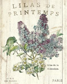 Lilas de Printemps  - Wild Apple Art Print