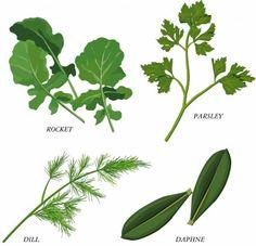 herbal foliage vector
