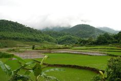 rice paddies of Mai Chau, Vietnam