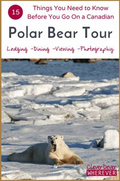 Want to see Polar Bears in Churchill? Read this first so you know how to prepare! via @julianadever
