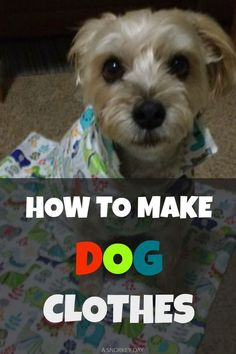 Mesmerizing Training Your Dog Proven, Useful Hints And Tips Ideas. Remarkable Training Your Dog Proven, Useful Hints And Tips Ideas. Dog Clothes Patterns, Dog Sweaters, Pet Clothes, Dog Clothing, Small Dog Clothes, Clothes Hangers, Dog Harness, Dog Leash, Dog Coats
