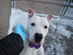 NOM NOMS - A1101091 - - Brooklyn  TO BE DESTROYED 01/20/17 **ON PUBLIC LIST** -  Click for info & Current Status: http://nycdogs.urgentpodr.org/nom-noms-a1101091/