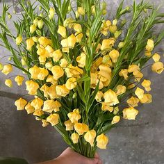 Golden yellow sandersonia from New Zealand . like little lanterns of fall happiness 😁 Fall Flowers, Yellow Flowers, Golden Yellow, Flora, Lanterns, Plants, Happiness, Autumn Flowers, Bonheur