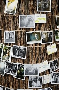 Twine with pegged photographs wrapped around a tree.    This would be cool to have at an outside wedding, a milestone wedding anniversary party, or a milestone birthday party