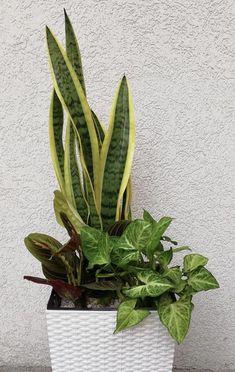 Tropical House Plants, House Plants Decor, Plant Decor, Garden Planters, Succulents Garden, Planting Flowers, Creative Flower Arrangements, Home Garden Design, Ornamental Plants