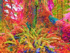 Psilocybin is good for depression...this is your forest on psilocybin