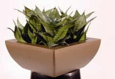 Linik deskbowl in copper, planted with Sansevierias