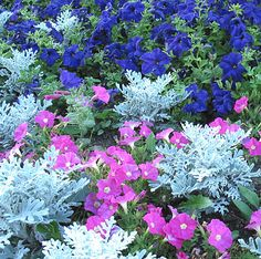 For hot, sunny areas, you can't beat a festive combination of 'Victoria' blue salvia, 'First Kiss Orchid Halo' annual vinca, and white narrow-leaf zinnia. These tough-as-nails plants love the sun and require almost no maintenance. Once established, they're relatively drought tolerant.    Growing Conditions: Full sun