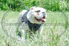 #Nylon #Dog #Harness with Cushion-Like Chest Plate $49.90 | www.all-about-english-bulldog-dog-breed.com
