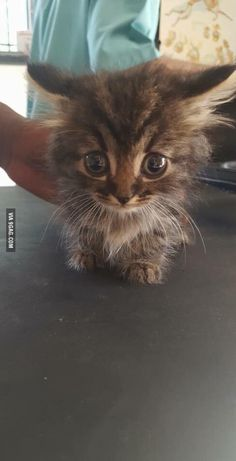 If you're feeling sad here's a picture of a rescued baby kitten