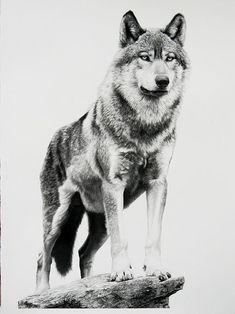 "Alpha by William Harrison Wolff Carbon Pencil ~ 41"" x 29.5"" #WolfTattooIdeas"