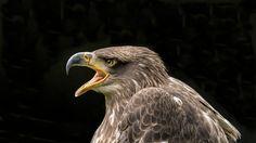 Bald Eagle, Bird, Animals, Europe, Golden Eagle, Northern Goshawk, Arctic, Paisajes, Alps