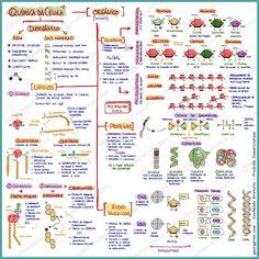 Mapa Mental Quimica da celula