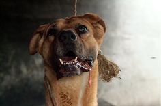 dog meat trade in South Korea -            Occupy for Animals!