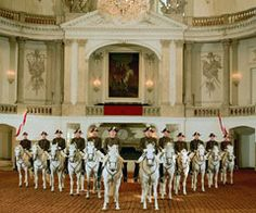 Spanish Riding School in Vienna, Austria.  The Lipizzaner Horses