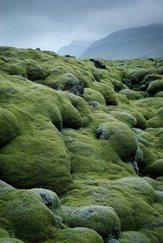 Lava fields covered with moss, Vestur-skaftafellssysla, Iceland