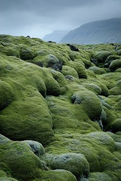"Iceland ~ Hundreds of years of mist have covered the Eldhraun lava and tephra flow from the Laki fissure, East rift, in spongy moss and lichen. Formed in the massive ""Laki fires"" that killed 1/4 of Iceland's people 1783-1784 AD."