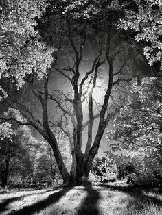 """""""Character is like a tree and reputation like a shadow. The shadow is what we th. - """"Character is like a tree and reputation like a shadow. The shadow is what we think of it; the tree is the real … pinned with – www. Landscape Photography, Nature Photography, Travel Photography, Dance Photography, Halloween Trees, Ansel Adams, Black And White Pictures, Pics Art, White Art"""