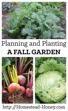 Planning and planting a fall garden in mid-to-late summer will ensure months of delicious harvests through the fall and winter. Garden Planning and Planting a Fall Garden Container Vegetables, Winter Vegetables, Growing Vegetables, Growing Tomatoes, Container Plants, Fall Container Gardening, Succulent Containers, Container Flowers, Veggies