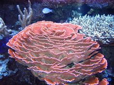 Corals For design collages