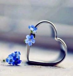 ❥●❥ ♥ ❤ Forget me not heart ❤. Heart In Nature, All Heart, I Love Heart, Happy Heart, Heart Art, Your Heart, Heart Wallpaper, Love Wallpaper, Heart Images