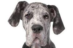 Bilderesultat for dogs