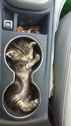 25 Cats That Just Love Taking A Car Ride