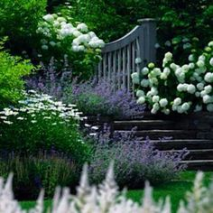 Plain white hydrangea Annabelle, catmint, lambs-ear and marguerite daisies, pretty gate and stones steps.