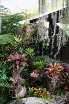 Bromeliads and Cordylines - I like their use of hollow logs, good way to add height and conceal containers (by Bruce Hansen via The International Cordyline Society site) Tropical Backyard Landscaping, Tropical Garden Design, Landscaping Plants, Tropical Plants, Landscaping Ideas, Small Gardens, Outdoor Gardens, Balcony Plants, Garden Trees