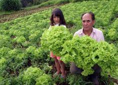 Agricultura familiar, paixão capixaba (ES)