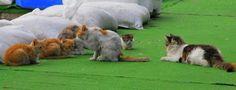 Cats are talking secret :)