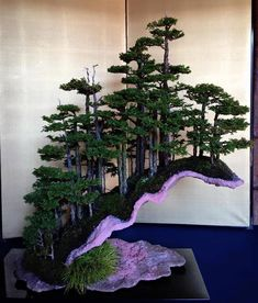 Growing bonsai from their seeds is essentially growing a tree from its seed. Get tips and guidelines on how to grow your first bonsai from its seed phase. Bonsai Tree Care, Bonsai Tree Types, Indoor Bonsai Tree, Bonsai Plants, Bonsai Garden, Garden Trees, Succulents Garden, Air Plants, Cactus Plants