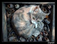 cat.. by ~LegioInferi on deviantART