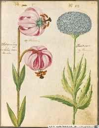 """Vorderdeckel (VD) aus: """" Hortulus Monheimensis - BSB Cod.icon. 31 ..."""" (1615)."""