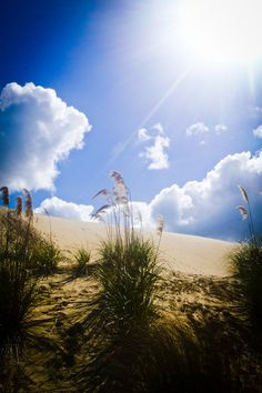 Sand dunes in New Zealand. Can you believe that this country has so many breathtaking landscapes?