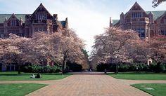 Universidad de Washington - Materiales Compuestos para Ingenieros  #cursos #ingenieria #courses #engineering