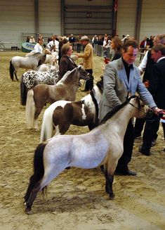 Old MacDonald held some Mini horse shows = a whole lot of cuteness in one place! This makes me want to own a mini horse! Miniature Horses For Sale, Miniature Ponies, Pretty Horses, Beautiful Horses, Animals Beautiful, Majestic Horse, Tiny Horses, Show Horses, Animals And Pets