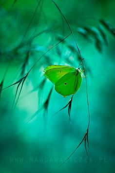 . In the mist a butterfly.......TG