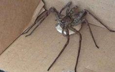 scorpioni immagini - Cerca con Google