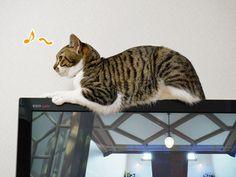 フツーに薄型テレビの上で くつろぐ。