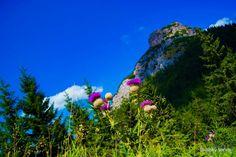 Prírodné krásy v rezervácii Rozsutec