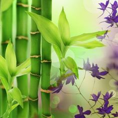 Australian Bamboo Grass Fragrance Oil for Irish Spring soap Candle Making Supplies, Soap Making Supplies, Wholesale Fragrance Oils, Bamboo Grass, Soap Colorants, Green Soap, Aroma Beads, Fast Growing Plants, Candlemaking