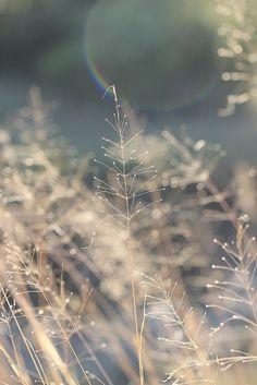 """""""Benditos aquellos que ven cosas hermosas en lugares humildes donde otros no ven nada"""" -Camille Pissarro"""